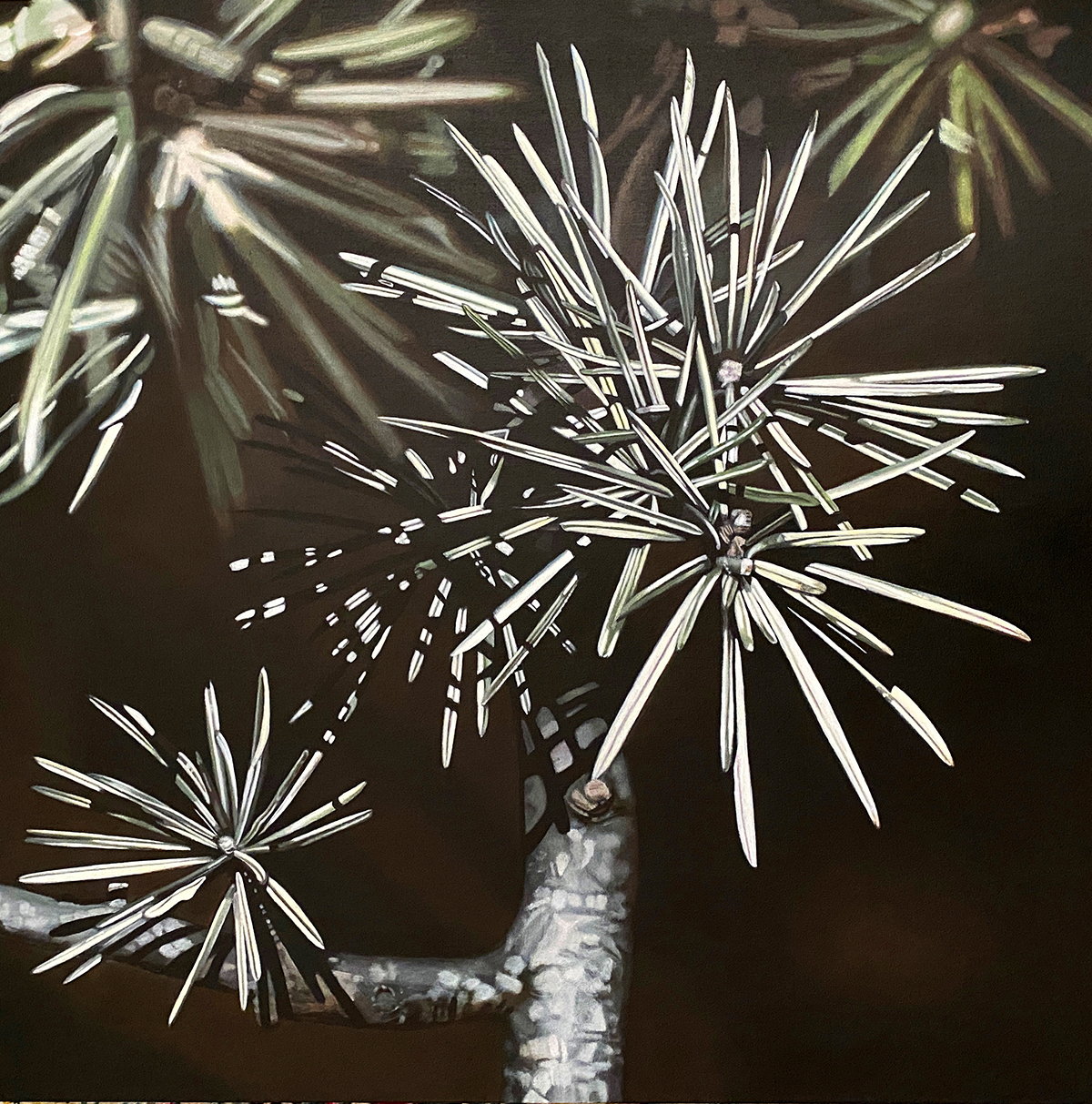 Square Fir--painting by LJ Lindhurst